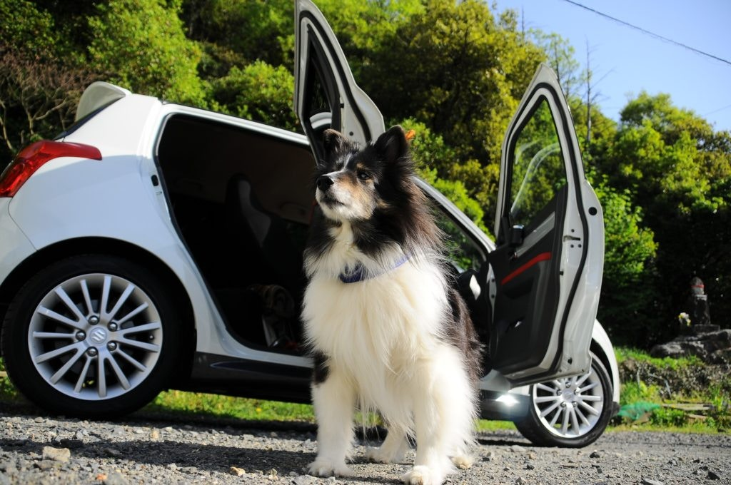 cars for dogs